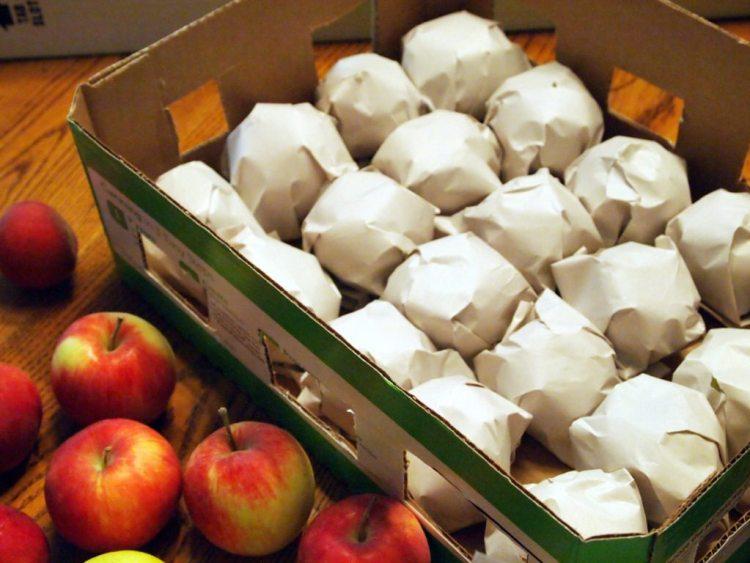 При оборачивании бумагой важно не нанести повреждения яблокам