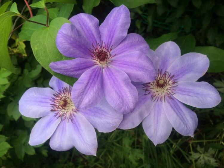 В Подмосковье цветы очень подвержены заболеваниям