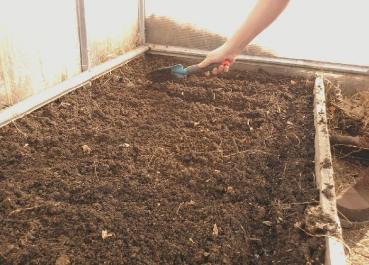 Подготовка почвы в теплице перед посадкой