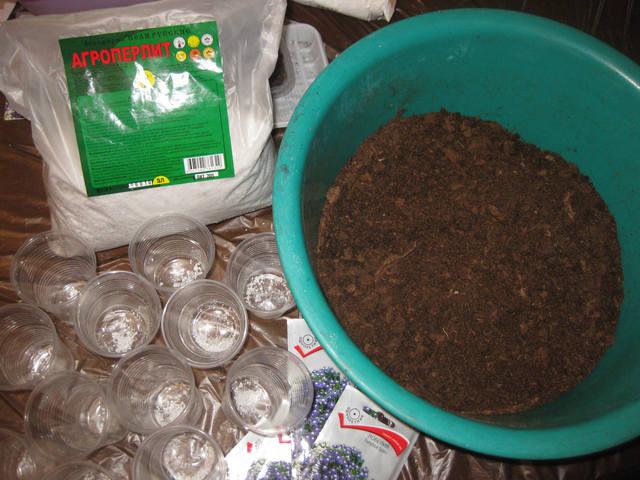 Лобелия: выращивание из семян