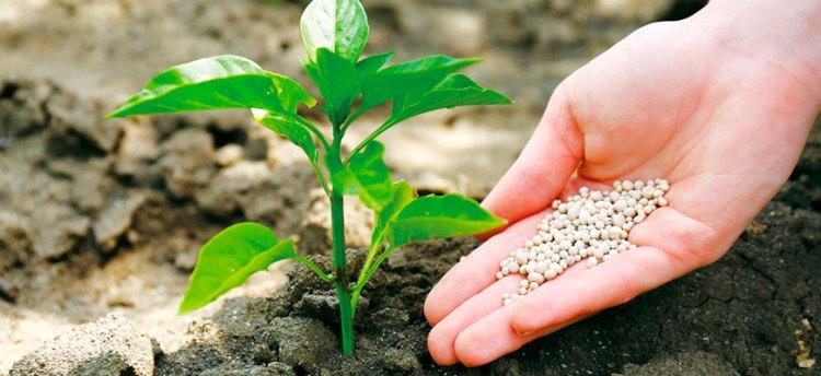 Нитрофоска: удобрение, применение на огороде