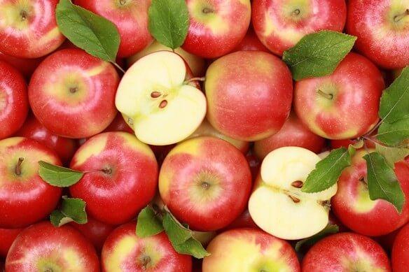 Gyümölcsültetvény telepítési tájékoztató