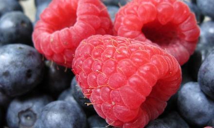 Ausztriai szakmai tanulmányútra:  alma, cseresznye, málna, áfonya ültetvények meglátogatására