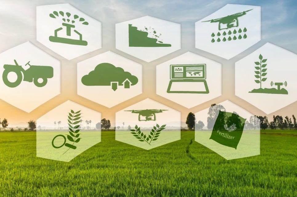 Munkaerőhiány, növekvő költségek – a kertészeti ágazat kihívásaira jelenthet megoldást a precíziós termelés