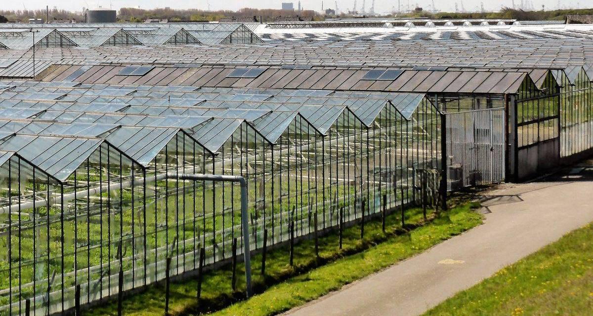 A FruitVeB Magyar Zöldség-Gyümölcs Szakmaközi Szervezet és Terméktanács nyilatkozata a FAKT AG kertészeti beruházásával kapcsolatos hírekről