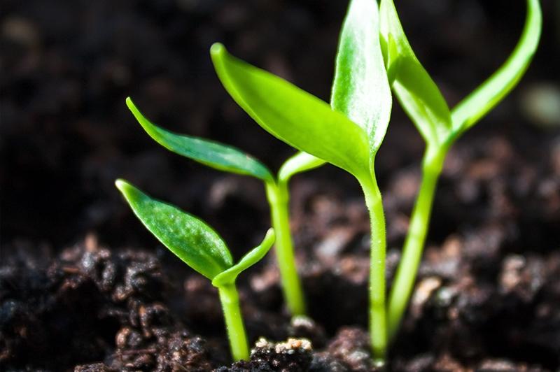 Új növény-egészségügyi szabályozás lép életbe év végén az Európai Unióban