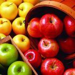 """""""Profiktól Profiknak"""" Szaktanácsadási Nap – Az alma tárolhatóságának javítása"""