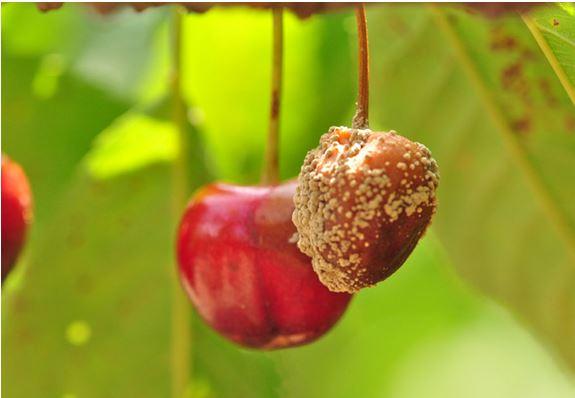 A jelenlegi időjárás a növényeknek és a károsítóknak is egyaránt kedvez