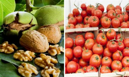 Szükséghelyzeti felhasználási engedély ökológiai termesztésű dió és paradicsom kultúrákban