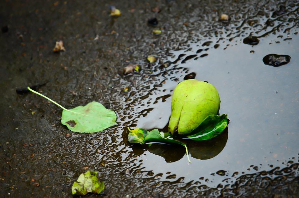 Példátlan kár érte a gyümölcsösöket