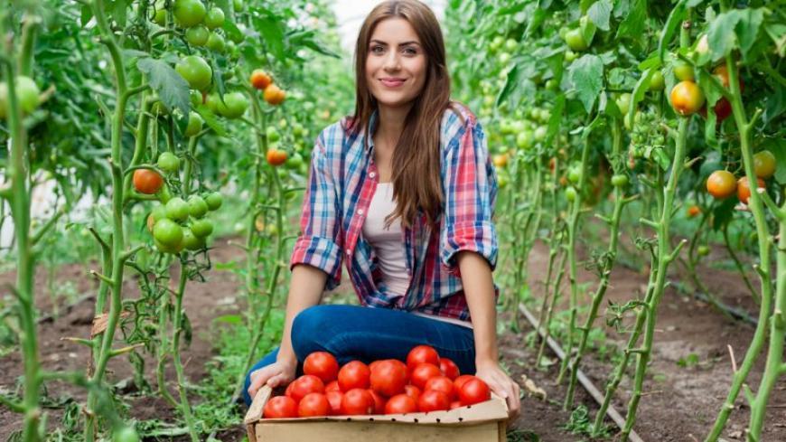 Felhívás: Women in Agrifood program