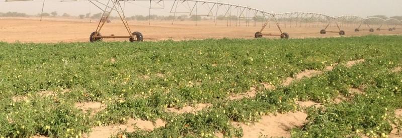 24 ezer hektár ipari paradicsom a spanyolországi Extremadura régióban
