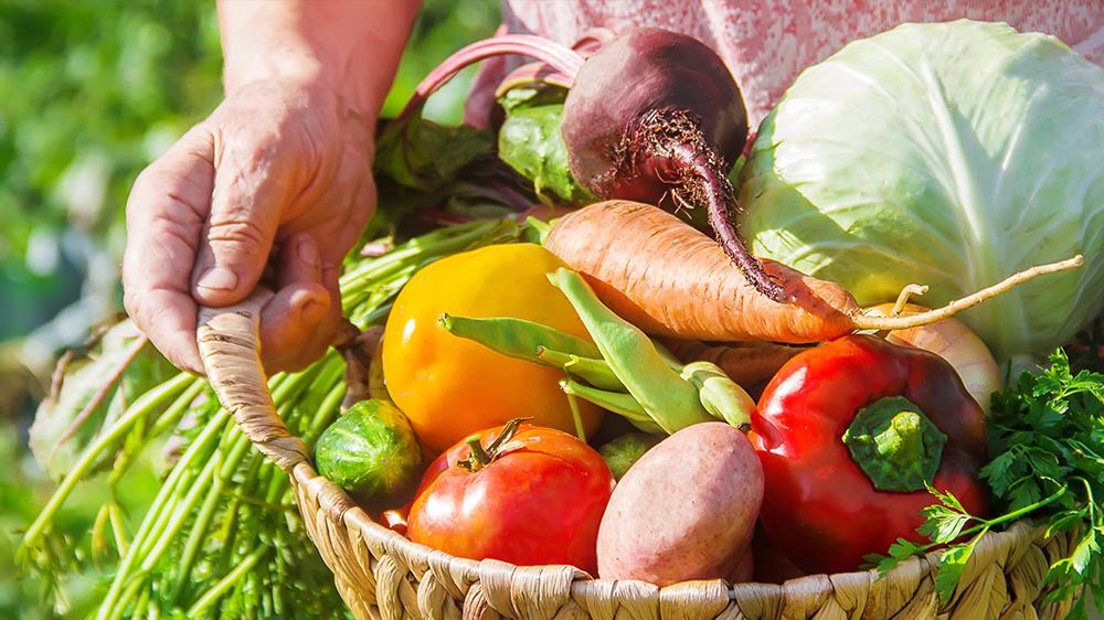 FruitVeB Bulletin 2019 – Zöldségtermesztés I. rész