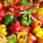 Az étkezési paprika világkereskedelme 2019-ben
