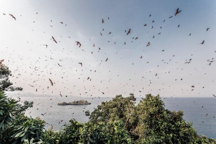 Travel Rwanda_Uganda_small-5009