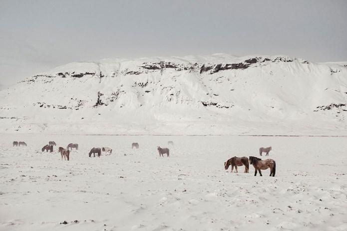 icelandfrumoltphotography2015133