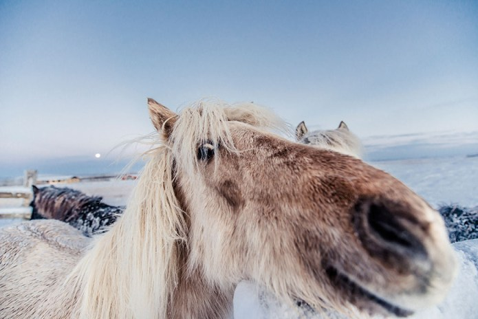 icelandfrumoltphotography2015136