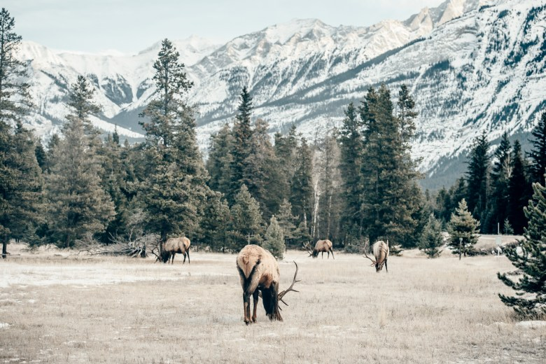 icefields-parkway-christian-frumolt-fotografie_web_small-51
