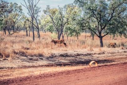 australiennordwestenblogfrumolt2018-108