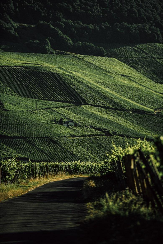German Wine Tour frumolt photography small size-124