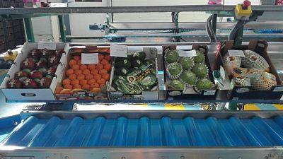 Variedades de frutas subtropicales que comercializa Frutas Los Cursos