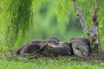 It is the 'hands' that do it for me. Unlike other four legged animals, otters seem to grasp things almost human-like and when they put their paws on each other, they seem like comforting one another. But I am no otter expert, so just a conjecture.