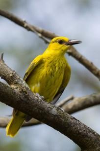 Juvenile, Pasir Ris Park