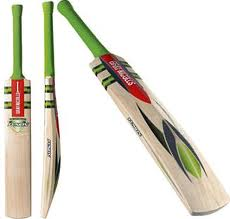 woodworm cricket bats