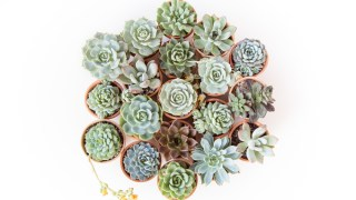 How to Grow Succulents - A Comprehensive Guide