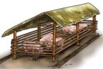 Pregnant sows Pigsty Building