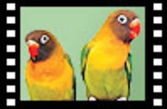 Kuşlar Mucize Videolar Belgesel Film İzle İnsan Haberler Turkiye