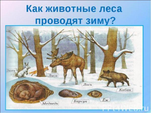 Лес Сезонные изменения Зима презентация для начальной школы