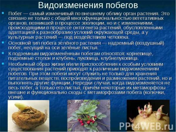 """Презентация на тему """"Строение цветковых растений ..."""