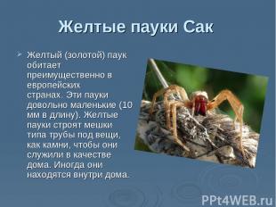 """Презентация на тему """"Самые опасные пауки"""" - скачать ..."""