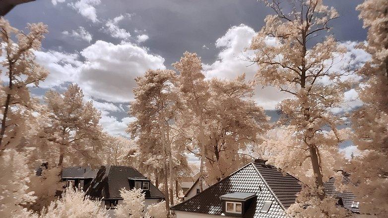 NextPit деревья для инфракрасной фотографии