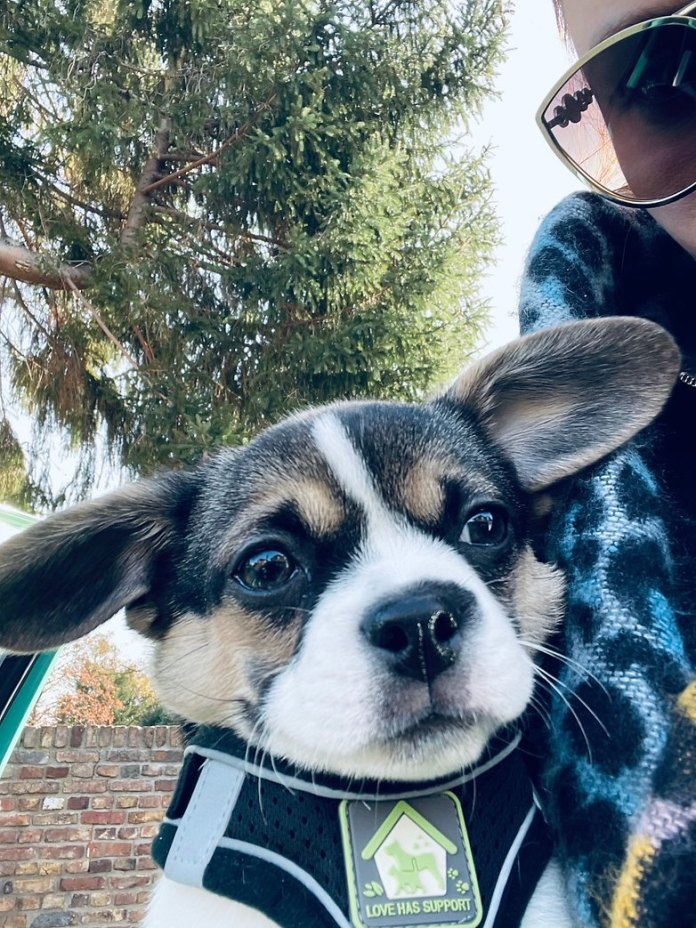 iphone 12 pro selfie hund