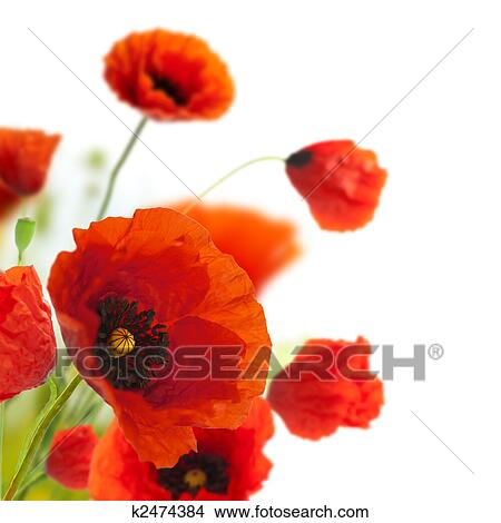 Stock Photo of floral design  decoration flowers  poppies border     Stock Photo   floral design  decoration flowers  poppies border   corner   Fotosearch