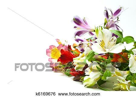 花 相片 | k6169676 | Fotosearch