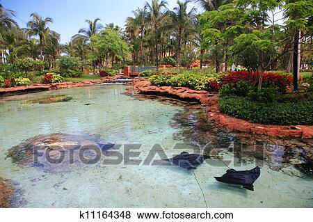 Pictures Of Atlantis In Bahamas K11164348 Search Stock Photos Images Print Photographs And