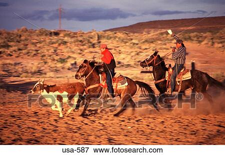 Picture of Navajo Ranchers Chasing Steer Arizona usa-587 ...