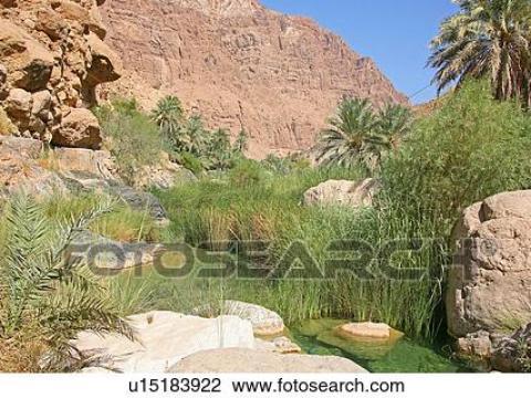 oase teich wüste, wasser, teich, fluss, oase stock bild