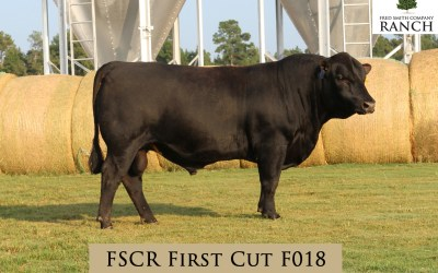 FSCR First Cut F018 in the Fall Sale!