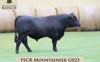 FSCR MOUNTAINEER G023 in the 2020 Fall Sale!