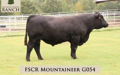 FSCR MOUNTAINEER G054 in the 2020 Fall Sale!