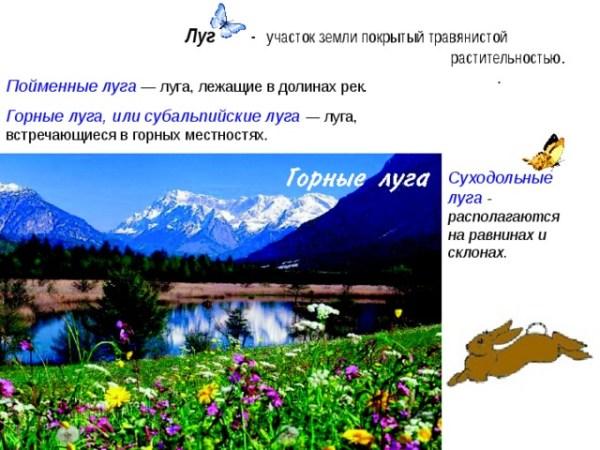 Растительный и животный мир лугов 4 класс Презентация