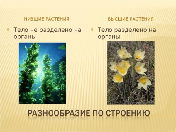 """Презентация урока """"Многообразие растений"""""""