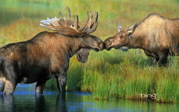 Животный и растительный мир Омской области - начальные ...