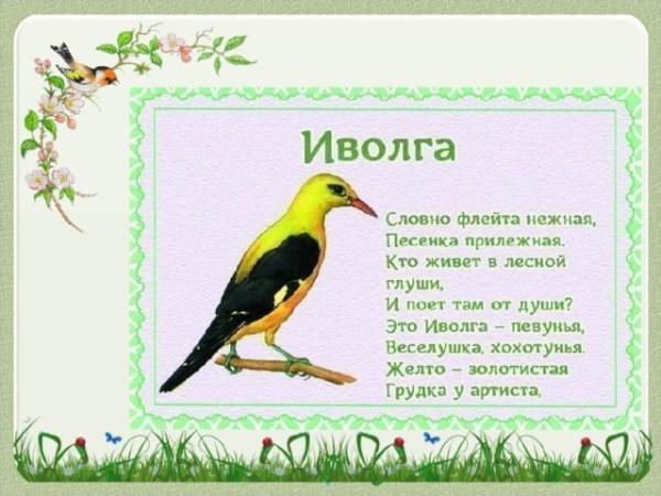 Детям о перелётных птицах в стихах и картинках ...
