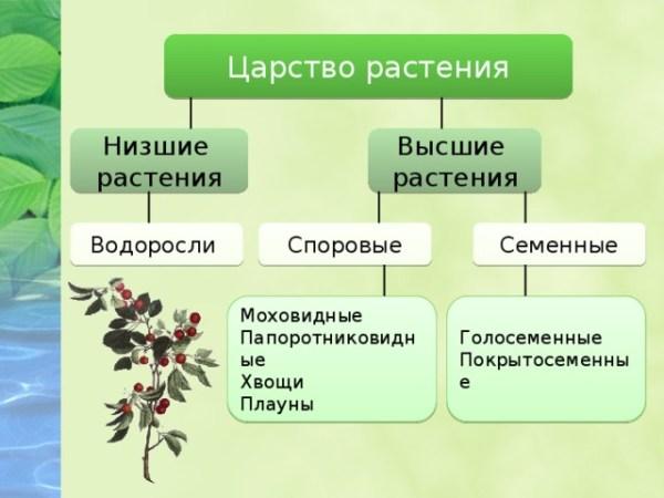 Общие признаки растений - биология, презентации