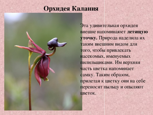 flori datând eticheta)
